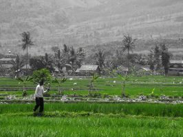 Walking in the Ricefield by fuckharee07