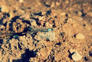 Dragonfly 2 by thepunkexperience
