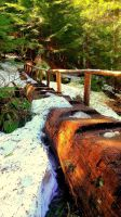 Log Bridge by TJ-Scar