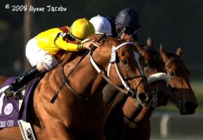 Curlin's last attempt to win by apajax6