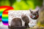 Nyan Cat Real Life Collage by MajorCooke