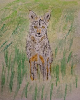 Coyote in the grass by llamallink