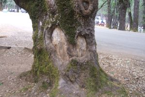 Heart of Tree by clarinetplayer