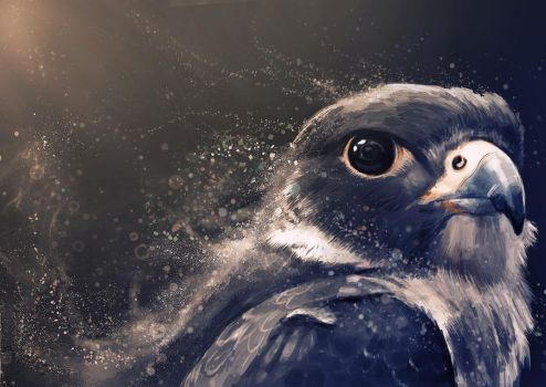 Peregrine by Delun