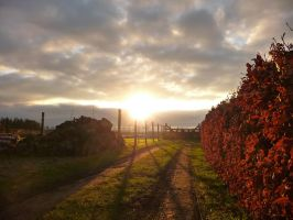 My view by Plackman