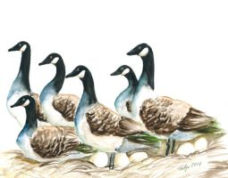 Six Geese by TalynDraconmore