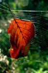autumn catched in the web by LosAnnas