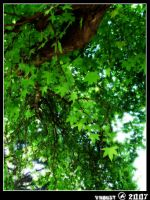 Under the mable tree ... by vnaust