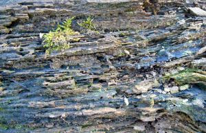 Stock texture - decaying wood by rockgem