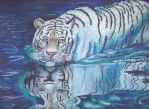 Tiger's Curse- Ren in water by hmbhaines