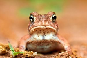 Toad by JamesMedlin