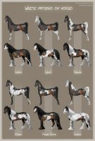 White patterns on horses by Aomori