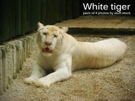 White tiger stock Pack by stuff-stock