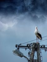 A stork on a lamp post by Kaddayah