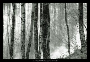 Trees by Francois088
