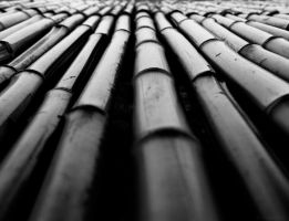 Bed of Bamboo by alimuse