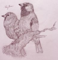 House Sparrows by Marmiexx