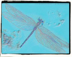 Dragonfly Blue Neon Sand by JaM-FaiRY