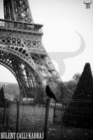A Crow Around Eiffel by bulentcalli