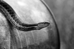 Snake on a Watering Can by PhotographyAndGoats