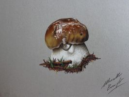 Porcino mushroom DRAWING by marcellobarenghi
