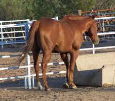 Equine Stock 25 by Rejects-Stock