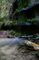 Dismals Canyon I by BlackCarrionRose
