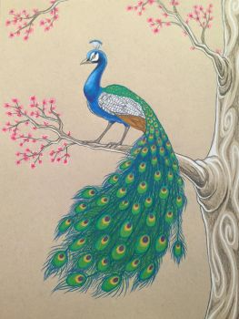 Peacock by celticsidhe