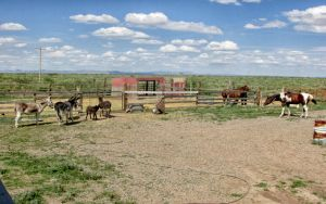 Donkeys,horses, and dogs by whendt