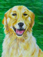 Golden Retriever on Green by Samishii-Kami