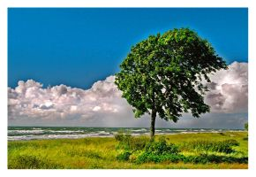 Lonely tree by Lluvia