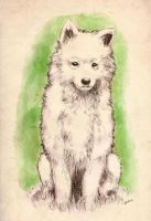 Samoyed puppy by Imaginary-wolf