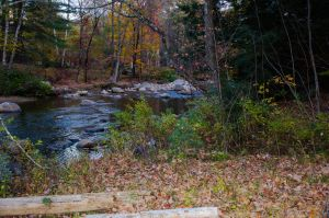 White Mountains  Fall Foliage  110 by FairieGoodMother