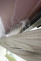 webs 2 by beth4328