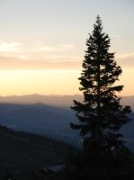 Silhouetted Pine by rawREN