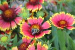Flower's Friend by BeanSprout-Photog