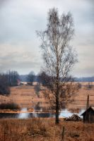 Pale colors of early spring by xrust