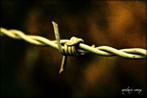 Barb  Wire by MelanieCarey