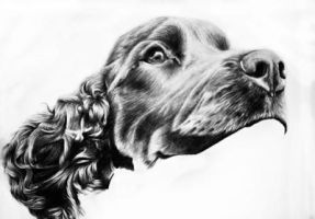 Cocker Spaniel WIP by RebeccaHalligan