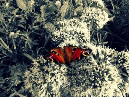 Butterflies are always beautiful by Bouwland
