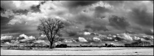 Black Tree Pano infrared... by MichiLauke