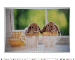 Bunnies in Cups by nunuu