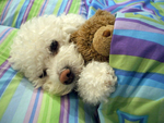 Can't sleep  without my Teddy by PerceivingNature