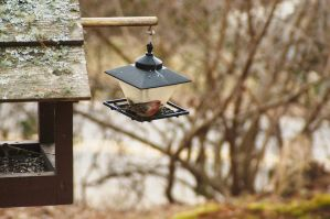 2015-03-03 Birds 06 by skydancer-stock