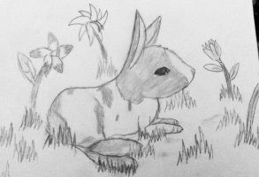 Drawing my bunny in spring by bpcampbell