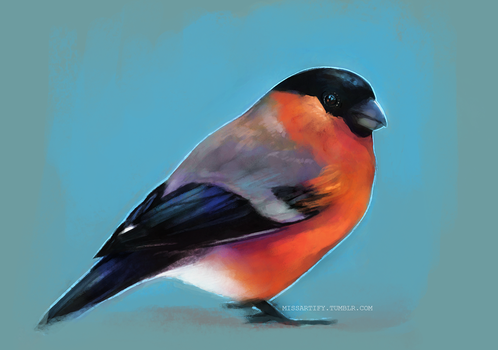 Bullfinch by missartify