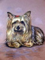 Yorkshire Terrier Gina by ArtsandDogs