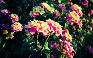 Flowers by osama0gamal