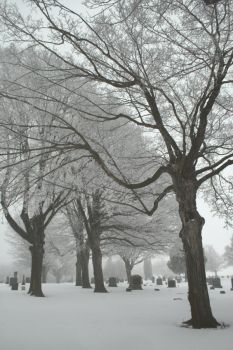 Twisted Graveyard Trees by Anachronist84