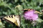Butterfly Macro2 by vincent-is-mine